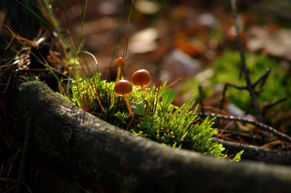 Certificación ecologíca Bio
