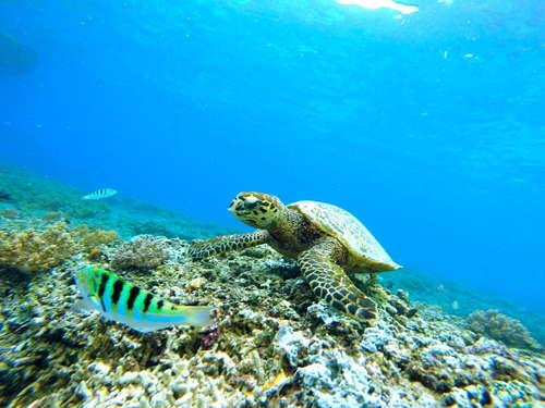 microplásticos en oceanos